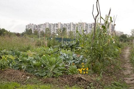 Urbani vrt Sopot