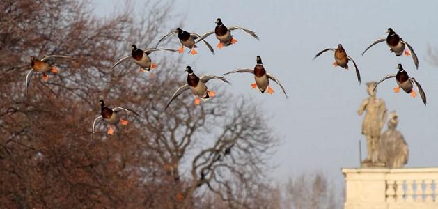 Ptice-Maciej Szymański
