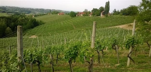 Međimurski vinogradi