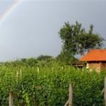 Vinograd-Stručić-Duga