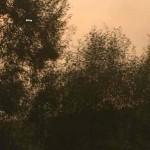 Darko Bavoljak-Putovanje