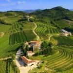 Torre_Rosazza_Vini_Colli_Orientali_Friuli_Panoramica_Vigneti