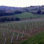 Štrigova-vinogradi