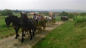 Kočije-vinogradi