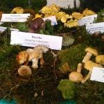 Festival gljiva-Pušćine