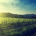 Terroirska vina-radionica