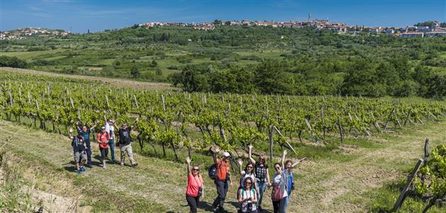 Istria Wine & Walk 2016