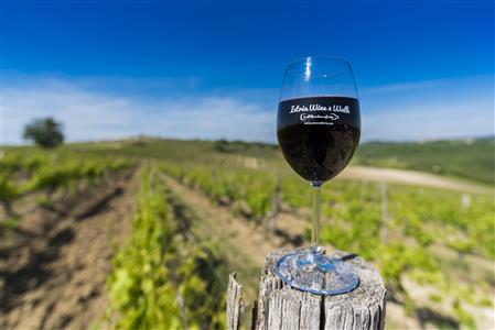 Istria Wine&Walk 2016