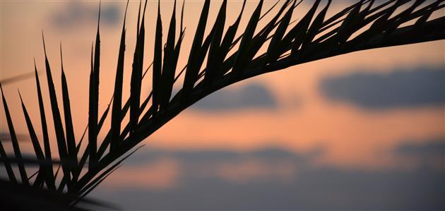 libanon-palma