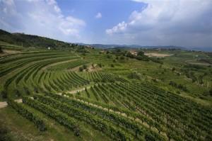 Movia-Vinogradi
