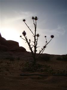 4-Jordan-Wadi Rum
