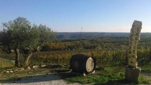 Vinogradi Cattunar