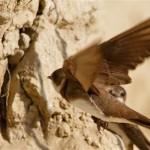 Bregunice-ptice (foto G. Šafarek)