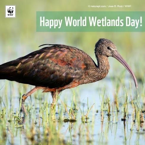 Naše rijeke, naše blago-Svjetski dan močvara